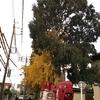 徳川美術館の樹木剪定の高所作業車オペ