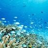小野寺防衛大臣が「環境保護対策について県側と協議を行うなど適切に進めてきており」とウソついていて、びっくりした。いつ防衛省が沖縄県と協議を行って適切に環境保全を行ってきたの?