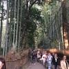 京都は嵐山も良いけど錦市場もおすすめ