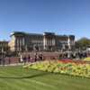 【ロンドン観光】晴天のバッキンガム宮殿・グリーン・パーク、ハイド・パーク