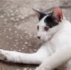 ホーチミンのコワーキングカフェで会った猫(世界の猫探し9匹目)