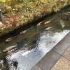 飛騨高山の温泉に行ってきました