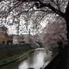 九品仏浄真寺〜駒沢公園・SNOW SHOVELING・大岡川桜散歩