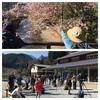 たっぷりジョウビタキ…高尾山探鳥会!