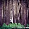 秋の浙江省臨海中国撮影ツアー桃渚深秋(3) 臨海紅杉林でポートレート