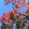 紅葉真っ盛り!箱根お勧めドライブ!