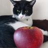 今日の黒猫モモ&白黒猫ナナの動画ー821