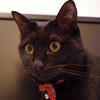 今日の黒猫モモ&白黒猫ナナの動画ー627