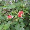 2012/05/07 春風ももうじき開花