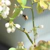 ブンブンぶんハチが飛ぶ