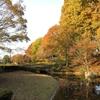 11月の清水公園(八王子)に行ってきました