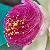 400年に一度咲く花(誤報でした。)