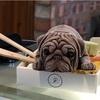 台湾に行くなら絶対に食べて欲しい!犬のアイス「J.C.co藝術廚房」