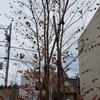 シンボルツリー選択時の注意点