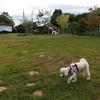 犬とグランピング イン 九十九里浜