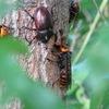 スズメバチの習性とヒトの勘違い