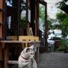 円山茶寮の看板猫に会ってきました