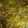 OLYMPUSのコンデジ 「XZ-10」で2016年11月1日までに撮影した写真を紹介します。カワセミがいました