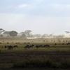 【妄想旅の計画⑥】東アフリカのサバンナを駆け巡るサファリ旅行