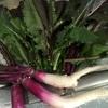日野菜(ひのな)*冬野菜