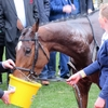 17/03/16 National Hunt Racing - Cheltenham Festival - Trull House Stud Mares' Novices' Hurdle (G2)