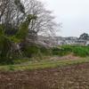 手賀沼遊歩道付近の景色と田の中のキジ