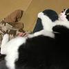 人間の身体はお猫様に合うように神に創られた説を唱える