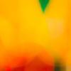 【ネットクイズ】オレンジ色を見分けられるかな?