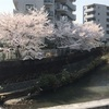 仕事と桜🌸と甲子園💁♀️野口君、明日は登板するのかな?