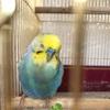 【無念】私の青い鳥が旅立ちました。