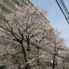 桜 墨田区亀沢2丁目 エムエフ両国敷地