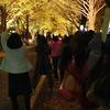 札幌市 北大 銀杏並木 / ライトアップ これは撮らさる風景だ