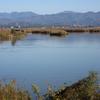 冬鳥の飛来地を訪ねて2 新潟県福島潟