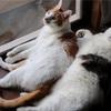 猫と自己崩壊(軽め)