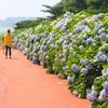 済州島(チェジュ島)6月のおすすめ観光スポット<花と海そして星のある済州>