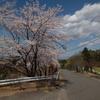 春です!(^^)!