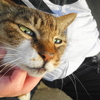 5月前半の #ねこ #cat #猫 その2