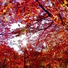 用作公園の紅葉PartⅡ