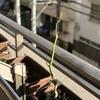ガーデニング:冬本番の到来で、我が家の植物たちはどうなる?