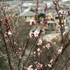 白梅の咲いて友の死知りにけり(あ)