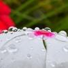 💧水滴MAX🌸