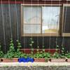 鞍掛豆と白大豆の播種と『銀漢の賦』