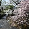 飛騨高山へ - vol.7 - 2015春 江名子川・飛騨国分寺と桜