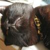 今日の黒猫モモ&白黒猫ナナの動画ー1017