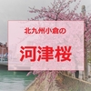 一足早く春を満喫!北九州小倉の河津桜
