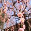 陽春の奈良逍遥