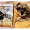#愛犬ラブ。22回目の月命日を迎えて・・・🌈