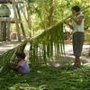 椰子の木からの、くらしに大切な贈りもの