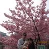 河津桜を見に行きました