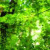 光と影と風の歌 耳を澄ませば森を駆け抜け